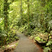 Gondwana rainforest at Dorrigo National Park