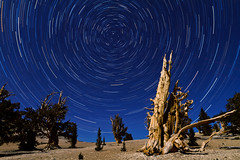 Stars (abaranda) Tags: california ca whitemountains bishop easternsierra inyonationalforest inyocounty ancientbristleconepineforest