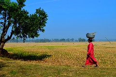 \ Village Scenes of Rural Bengal (anindya55) Tags: woman landscape nikon village kitlens lifestyle getty saree bengal gettyimages westbengal khet redsaree d5100 paschimbanga   1855mmf3556afsvrdx