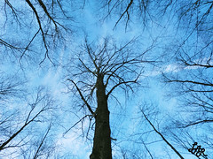 Circulatory System Of The Sky (LuiS_AR) Tags: blue sky tree dark circle center tall bllue circulatory