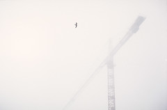 Seagull and Crane