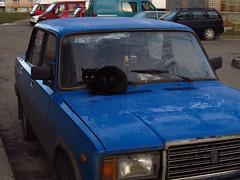 The owner of a car  ( lol) (halina.reshetova) Tags: city blue winter cats house black cold nature smile car animals mood hoarfrost sundry