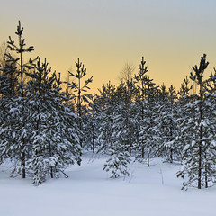 A little snow (Barry_Madden) Tags: trees sunset snow forest suomi finland