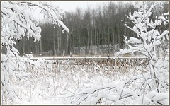 Landscape Winter Snow (blmiers2) Tags: trees winter white snow cold nature water landscape photography nikon explore cattails coolpix 2012 s3000 explored blm18 blmiers2