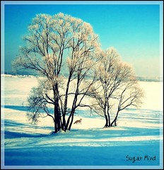 Winter Time (Sugar Mind) Tags: morning winter white snow tree nature colors scenery time natura sugar fox mind neve scenario 1001nights albero inverno colori bianco volpe flickraward platinumheartaward bestcapturesaoi sailsevenseas flickraward5 mygearandme mygearandmepremium mygearandmebronze mygearandmesilver mygearandmegold mygearandmeplatinum mygearandmediamond flickrawardgallery ringexcellence dblringexcellence tplringexcellence pipexcellence eltringexcellence