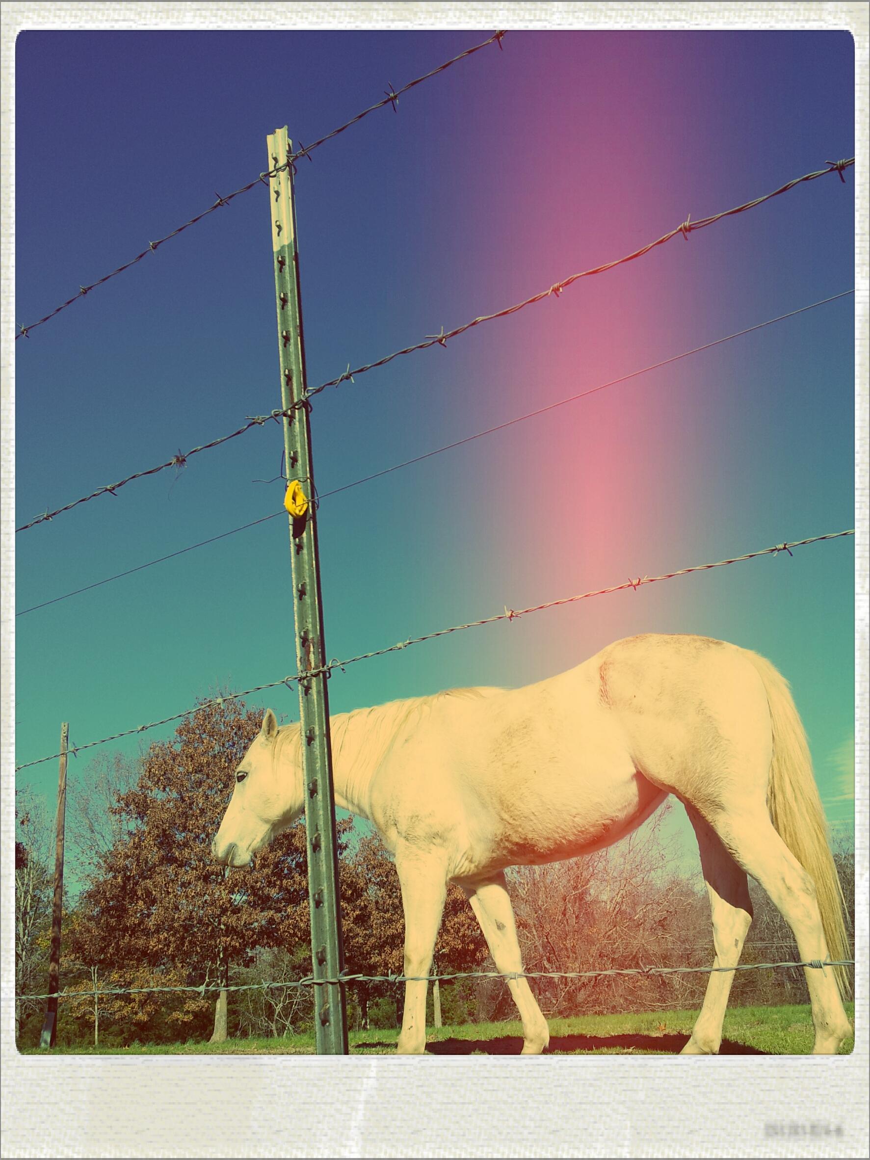 2011-12-30 14.41.10 - Aladin,Local,Nolaroid.jpg