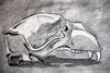 skull172 (crimsonlizardart) Tags: illustration skull charcoal charcoaldrawings charcoalillustrations