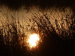 Groes Torfmoor (O de Andrade (MoScha)) Tags: germany paul deutschland europa europe owl nrw moor bog alemanha westfalen hille westphalia northrhinewestphalia hochmoor renania lbbecke torfmoor nordrheinwesfalen renniadonortevestflia vestflia ostwesfalenlippe
