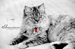 Aqooore❤ (Aishah Abdullah) Tags: cat
