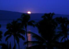 Moon And Palm Silhouette; Maui, Hawaii (hogophotoNY) Tags: blue trees usa moon black reflection 2004 water silhouette night island hawaii islands maui palm palmtrees palmtree hawaiian afterdark hawaiianislands mauihawaii hogo hawaiiusa silhouettepalm usaisland hogophoto hawaiiunitedstates mauihawaiiusa isalndmoon