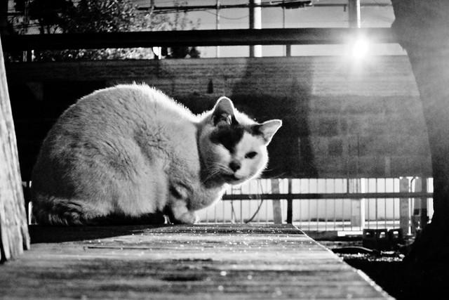 Today's Cat@2012-01-24