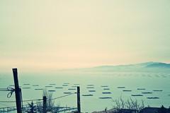 Recuerdos. | Memories. | Souvenirs. (...Aika...) Tags: blue love fog azul mar time amor memories delete bleu memory niebla brouillard ria recuerdos lamour memoria forget tiempo borrar seabed olvidar oublier detemps lammoire desouvenirs litdelamer desupprimer