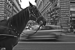 MEZZI DI TRASPORTO (*Naig*) Tags: horse rome roma car cavallo macchina correre viaggiare inmovimento mezzoditrasporto onmoving