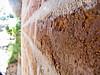 Wall (karthipec) Tags: dakshinchitra