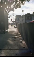 Sunlit Stroll (airencracken) Tags: film la losangeles kodak february sawtelle portra kodakportra160vc emulsion c41 160asa 2011 kodakportra leicam3 prolab 160iso airencracken swanlabs