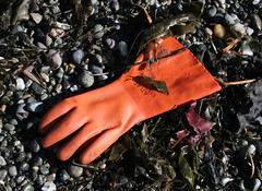 I'm happy to report there was not a severed hand in this glove! (Librarianguish) Tags: walk gorgeous bluff sunnyday 212 ebeyslanding unseasonablywarm