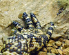 Attack of the Giant Gila Monster! (Mark...L) Tags: zoo milwaukeezoo milwaukeecountyzoo mexicanbeadedlizard