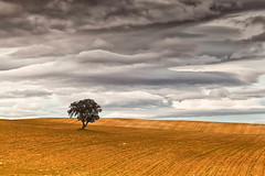 (Antonio Carrillo (Ancalop)) Tags: winter espaa cloud cold tree field canon de landscape arbol la spain europa europe cloudy mark paisaje murcia filter cruz ii nubes campo l 5d invierno lonely nublado lopez antonio frio f4 minimalist solitario carrillo graduated 70200mm minimalista caravaca gnd8 ancalop
