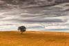 (Antonio Carrillo (Ancalop)) Tags: winter españa cloud cold tree field canon de landscape arbol la spain europa europe cloudy mark paisaje murcia filter cruz ii nubes campo l 5d invierno lonely nublado lopez antonio frio f4 minimalist solitario carrillo graduated 70200mm minimalista caravaca gnd8 ancalop