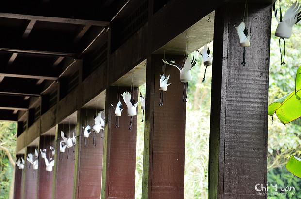 木柵動物園鳥園11.jpg