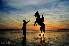 Exasperation (Iqbal.Khatri) Tags: travel winter pakistan sunset horse seascape public place images east getty middle karachi wrath sindh fury seaview exasperation prancing iqbal khatri seaviewkarachi gettyimagespakistanq12012 gettyimagesmiddleeast