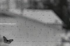 (DavidGuthrie) Tags: bw white black film window 35mm nikon moth screen fe
