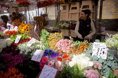 Columbia Road (aurlien.) Tags: flowers london market shift tilt ts flowermarket tse eastlondon columbiaroad e2 tiltshift canoneos5dmarkii eos5dmarkii tse24mmf35lii canontse24mmf35lii