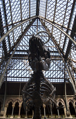 Oxford University Museum of Natural History (Xalira) Tags: england heritage history museum spring university natural oxford april biology trex 2015