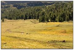 Prateria (Alfoja) Tags: italy alps italia foglia prairie alpi prato valledaosta valtournenche prateria alfoja lucianofoglia