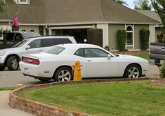 Challenging the Law; Dodging the Possibilites (49er Badger) Tags: hydrant dodge challenger