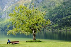 Somewhere in paradise (sigi-sunshine) Tags: sea holiday mountains tree green nature beautiful bench see waiting paradise urlaub natur relaxing bank berge slovenia sit slowenien grn bergsee baum lonetree lonelytree triglav paradies triglavnationalpark bohinjskojezero pictureeque