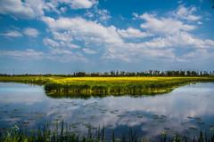 National park Biesbosch (olafgroeneweg) Tags: sky cloud sun holland nature water netherlands colors beautiful beauty grass clouds landscape nationalpark amazing nikon colorful view cloudy nederland natuur dordrecht grassland reflextion zuidholland