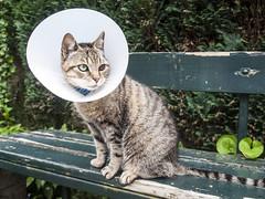(Teun Donders) Tags: nature animal cat garden bench eyes outdoor bank cap tuin kap teun 2016 donders