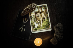 #262 of 365 days - I got wolf in oracle (Ruadh Sionnach) Tags: wolf oracle celt celtic ritual tarot witchcraft witch pine cone candle mushroom cogumelo pagan paganism paganismo awen nature natural