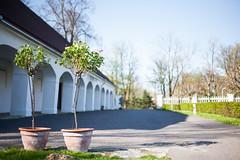 IMG_7587-2 (greta&eos) Tags: road tree garden pots manor