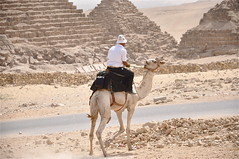 Stealing the Show (The Spirit of the World) Tags: egypt cairo camel pyramids giza autofocus touristpolice thepyramids 5photosaday mygearandme flickrstruereflection1 flickrstruereflection2 scenefromthepyramids