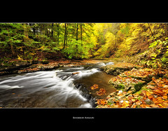 Fillmore Glen State Park, Finger Lakes. (Shobeir) Tags: longexposure autumn panorama newyork leaves america creek season landscape waterfall october stream hiking wideangle fallfoliage trail changing covered fallen fingerlakes northeast goldenleaves autumninnewyork panoramiclandscape fillmoreglen autumnlandscape shobeiransari fingerlakesfall newyorkscenic
