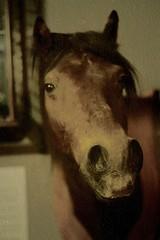 horse's (head) (horsesqueezing) Tags: horses texture pattismith horseshead soundtrackmonday