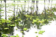 Big Island Lagoon