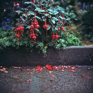 Garden Flowers #10