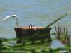 Common Tern (5 of 5) (Forest (GKweb.it)) Tags: bird birds canon tern sterne terns sx20 molentargius commontern sterna sternahirundo commonterns sternacomune canonsx20is canonsx20 sternecomuni