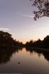 Lagoon (MattPenning) Tags: autumn sunset water duck pentax peaceful lagoon potd k5 springfieldillinois washingtonpark mattpenning kmount mattpenningcom penningphotography justpentax pentaxda1650mmf28edalifsdm pentaxk5
