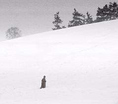 CITIZEN KANE (kenny barker) Tags: christmas trees winter sunset bw snow nature monochrome landscape lumix scotland sled dunblane tistheseason panasonicg1 kennybarker