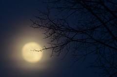 Hazy Moon (mountain_doo2) Tags: moon tree haze hazy d7000