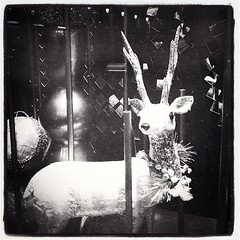 Christmas Decoration. (ekaro9) Tags: christmas lebanon window display decoration deer beirut iphoneography instagramapp uploaded:by=instagram foursquare:venue=4e5fa9f9ae600b89d7c6eb3cc