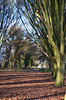 Hornbeam Avenue (grannie annie taggs) Tags: trees light forest shadows path bushypark hornbeam 100commentgroup mygearandme mygearandmepremium mygearandmebronze mygearandmesilver mygearandmegold
