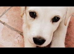 Sguardi (Stefano085) Tags: camera trip vacation italy dog cinema art colors cane digital canon cuties compact sx100