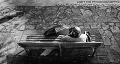 36 KDD oficial Santiago de Compostela - 17-12-2011 (DNS Fotografa) Tags: parque santiago puerta camino minolta sony dani compostela 1750 konica 300 alpha kdd tamron f28 vigo quedada maxxum nidazo