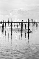Albufera III (Paco Costa) Tags: water valencia canon relax landscape agua paisaje calm calma albufera 550d tamron1750