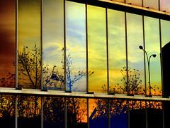 LEÓN.- Atardecer reflejado en el Musac. / Sunset reflected in the Musac. (Bernardo del Palacio) Tags: santiago color reflections contraluz ego catedral ciudad cathédrale santiagodecompostela compostela reflejo sanmarcos reflexions breathtaking semanasanta reflejos cathedrale bestofthebest sanisidoro amazingcolors reflects gotico gotic musac dinnerandamovie blueribbonwinner artisticexpression rosetón jacobeo mouseion reflejada digitalcameraclub cherryontop 5photosaday kartpostal golddragon abigfave perfectangle anawesomeshot flickrplatinum blueribbonwinne superbmasterpiece digitalphotoart diamondclassphotographer amazingamateur theunforgettablepictures brillianteyejewel platinumheartaward betterthangood goldstaraward internationalgeographic photoexplore academyofphotographyparadiso bestminimalshot multimegashot explorewinnersoftheworld alwayscomment5 inspiredbyhim musacmuseo breathtakinggoldaward awesomeblossoms cathol 100commentgroup inspiringgallery photoartbloggroup berpala dragondaggerphot dragondaggerphoto dragondaggerawards graphicmaster